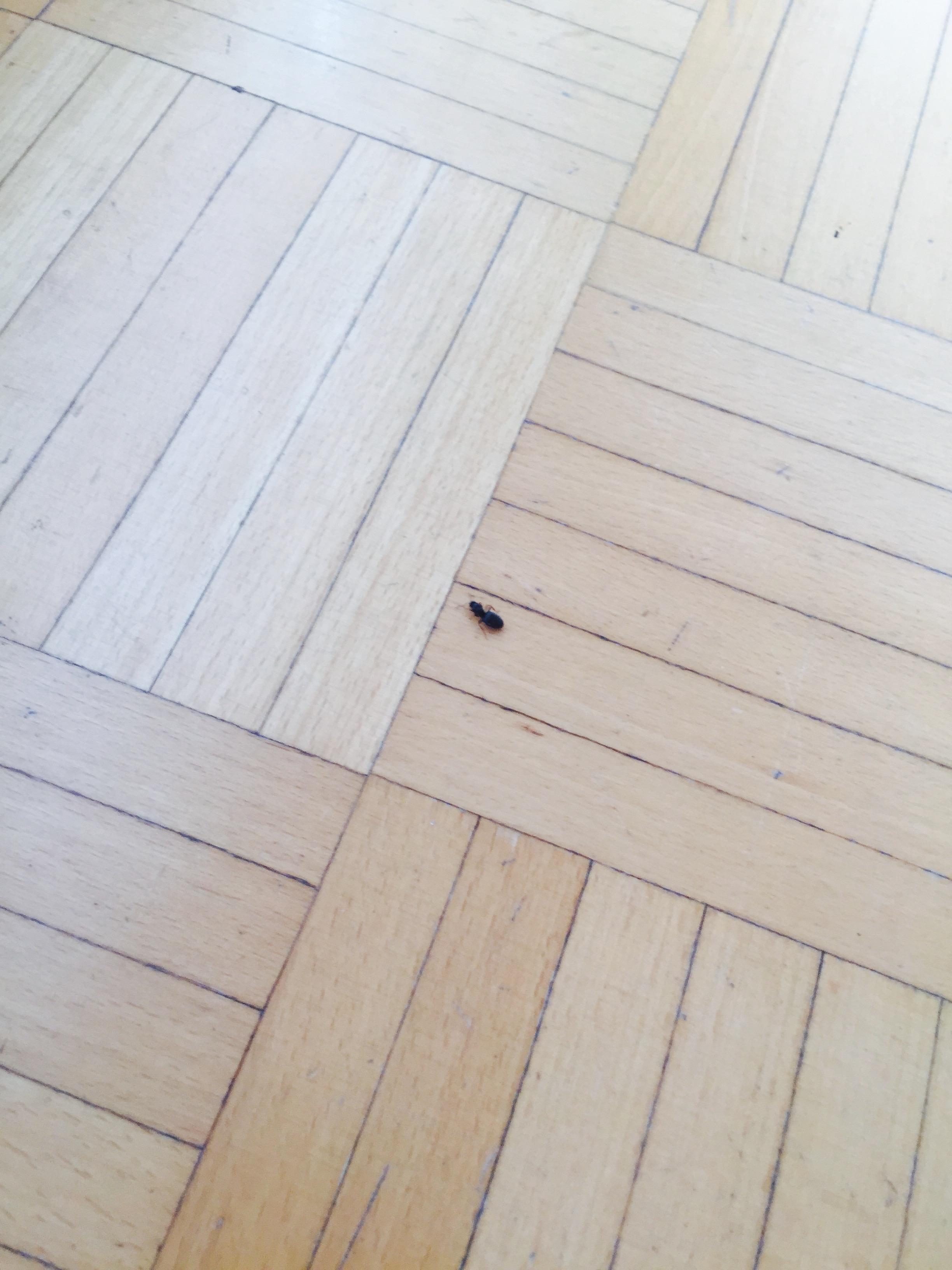 schwarze käfer/ameisen mit flügeln in der erde ... - Kleine Ameisen In Der Küche