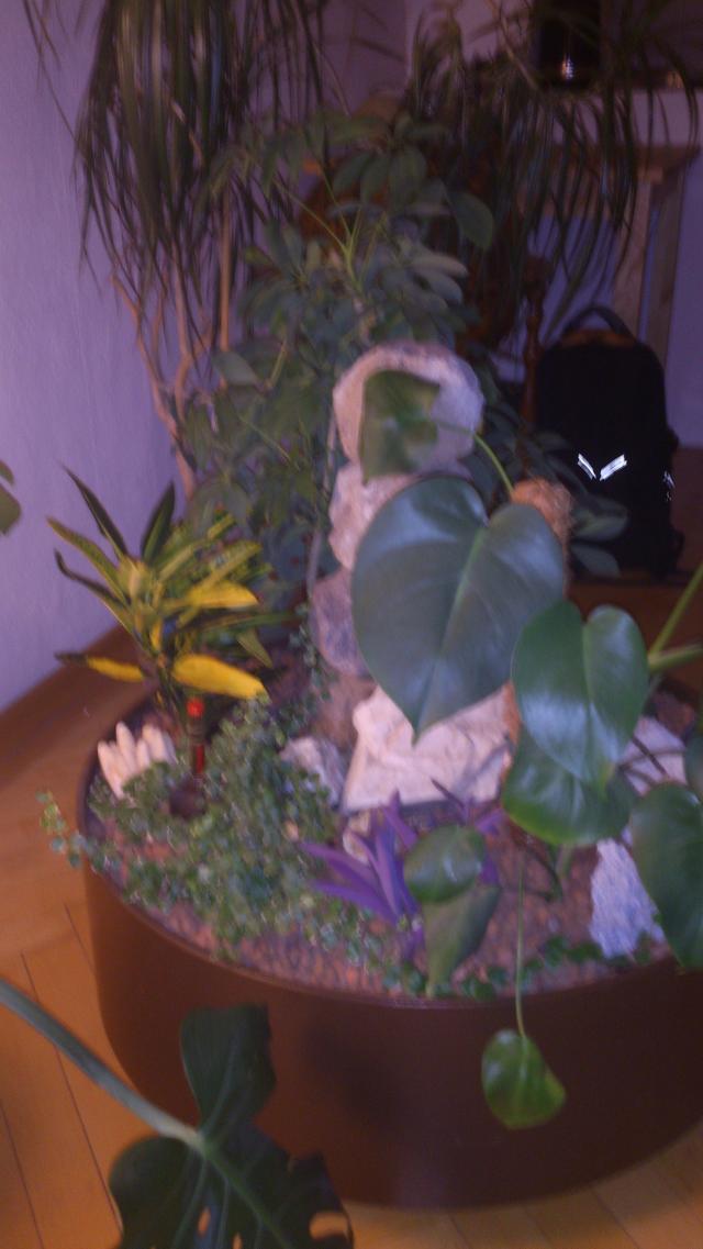 pflanzenbestimmung sch dlinge und pflanzenkrankheiten sch dlinge green24 hilfe pflege. Black Bedroom Furniture Sets. Home Design Ideas