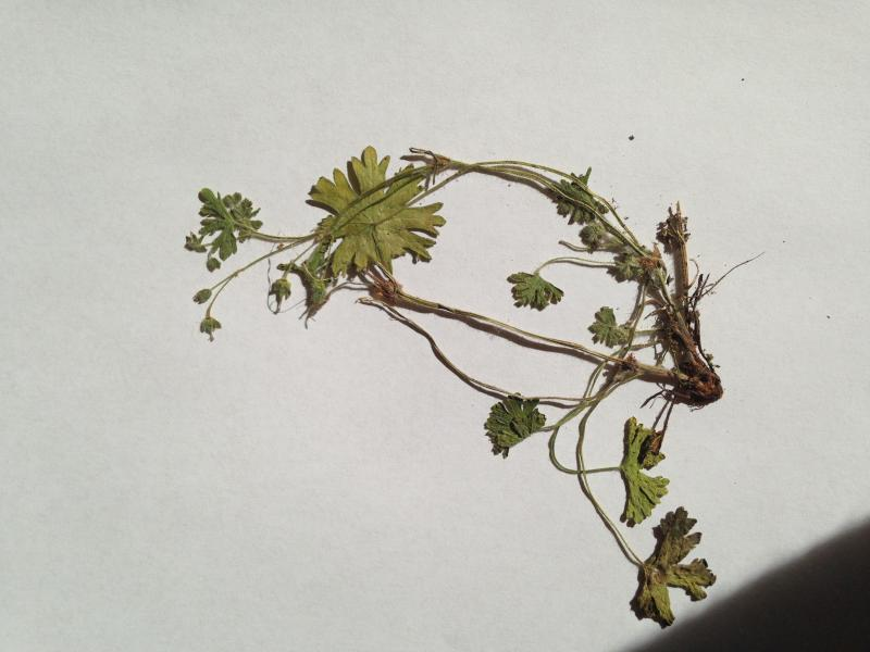herbarium ich brauche hilfe new greeneration green24 hilfe pflege bilder. Black Bedroom Furniture Sets. Home Design Ideas