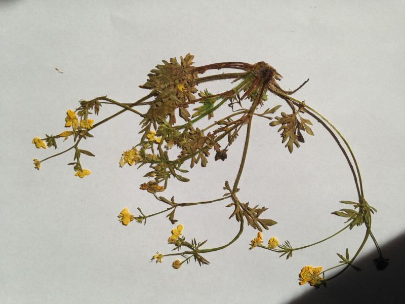 pflanzenbestimmung in der schule herbarium new greeneration green24 hilfe pflege bilder. Black Bedroom Furniture Sets. Home Design Ideas