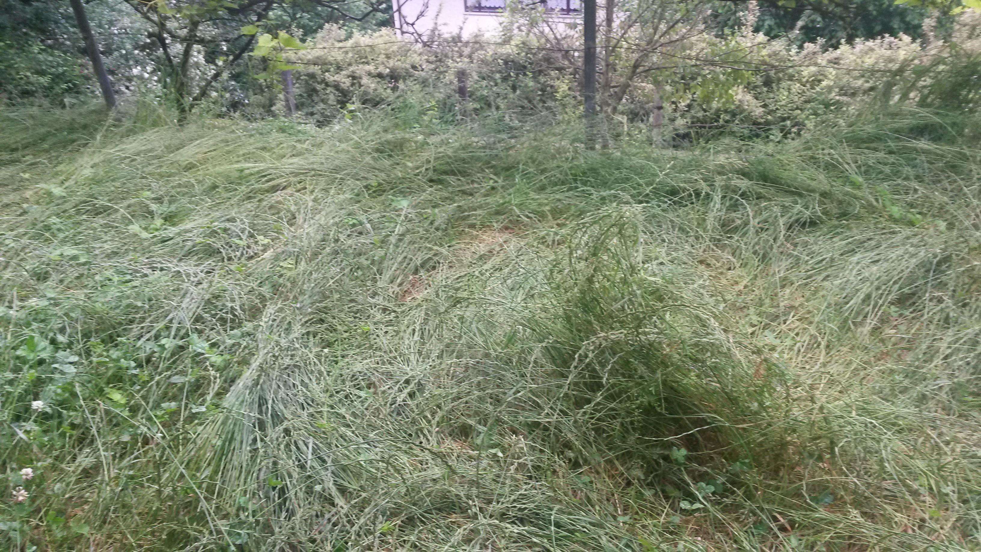 boden n hrstoffe entziehen natur umwelt green24