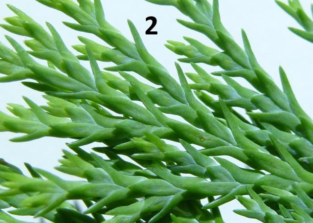 hilfe wie hei t diese pflanze siehe bilder pflanzenbestimmung pflanzensuche green24. Black Bedroom Furniture Sets. Home Design Ideas
